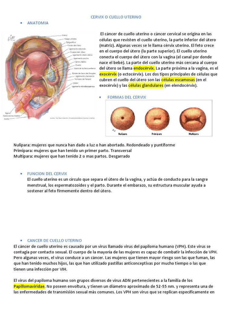 Paraziți fetali umani. Parazitozele intestinale: giardioza si ascaridioza