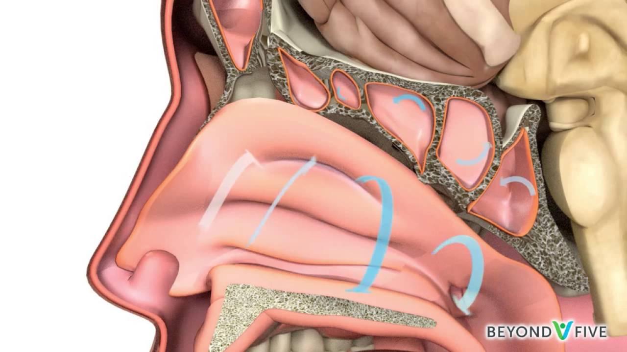 tratamentul papilomului intestinal