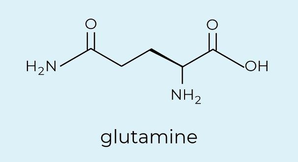 l glutamine dysbiosis