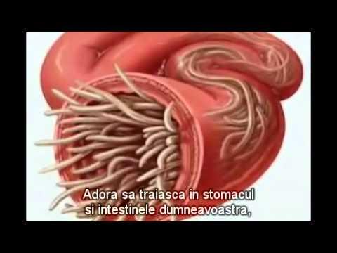 Sub ce formă după viermi decaris părăsesc intestinele