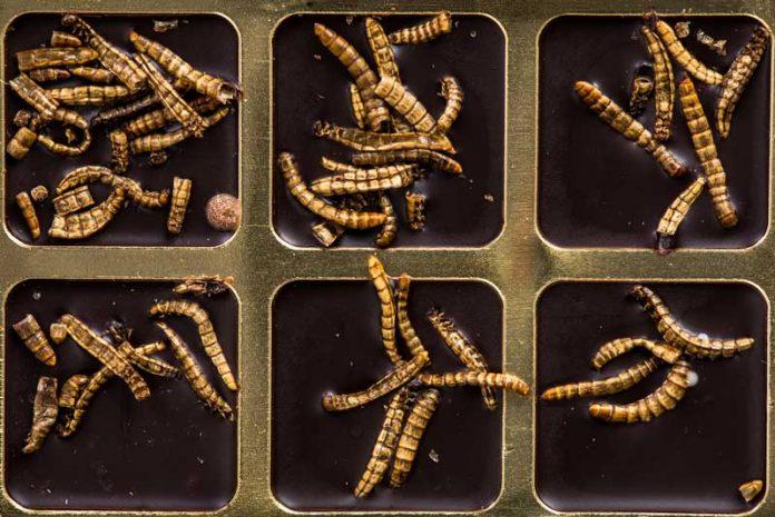 leac dovedit pentru viermi efect de vierme