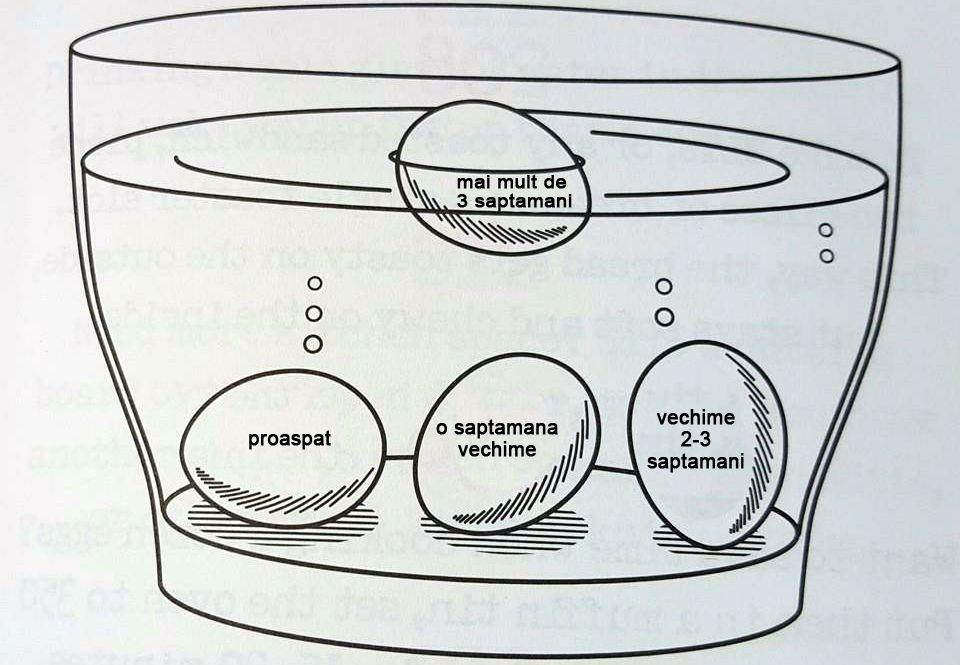 cât de des sunt ouăle hpv virus simptomi kod zene