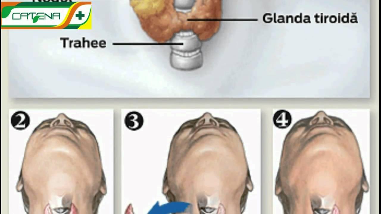 Blog Faunus Plant - Glanda tiroidă: Influența hormonilor tiroidieni asupra metabolismului