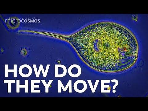 Un test care determina rapid cauzele infectiilor digestive: diagnostic molecular | coboramlaprima.ro