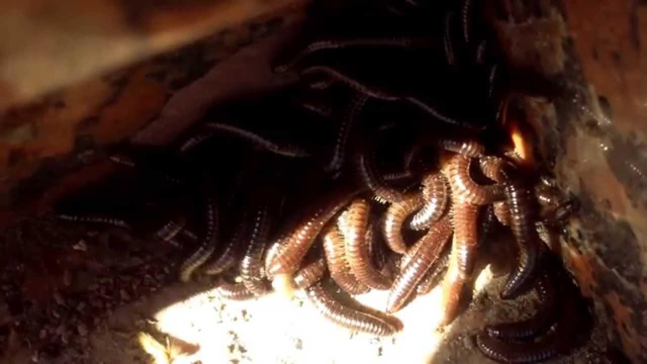 Legoa ninjagoa cent 59 vierme de noapte ninja