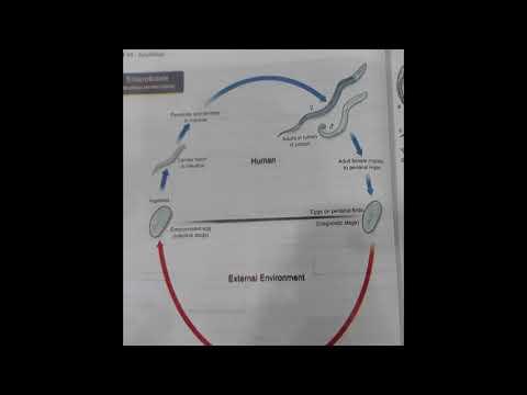 îndepărtarea viermilor din corp localizare pinworm