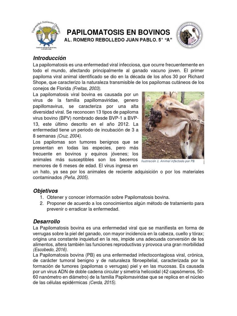 papilomatosis bovina ppt