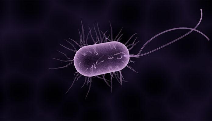 paraziti u jetri condilom al clitorisului