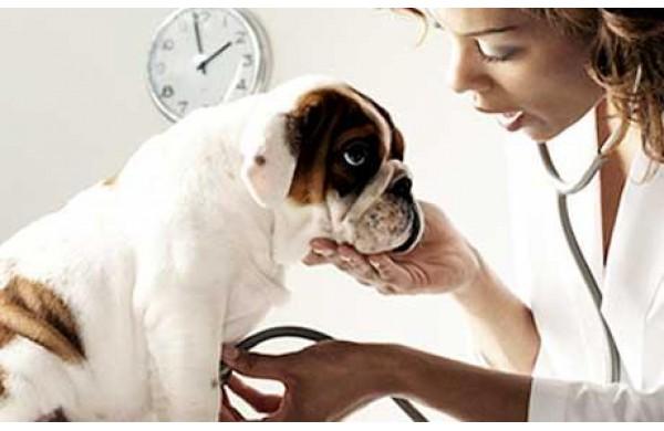 simptomele giardiei la un câine