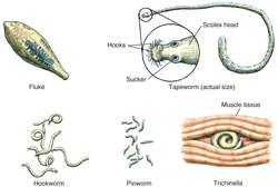 helminths definition paraziti la gene