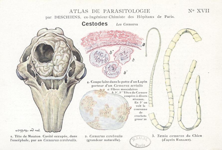 consecințe ale condilomului paraziti u oku psa