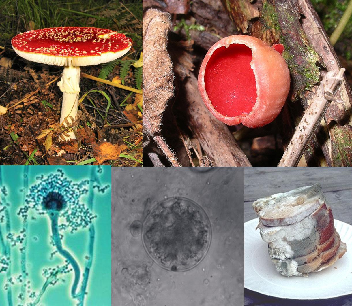 ciuperci parazitare obligatorii abdominal cancer markers