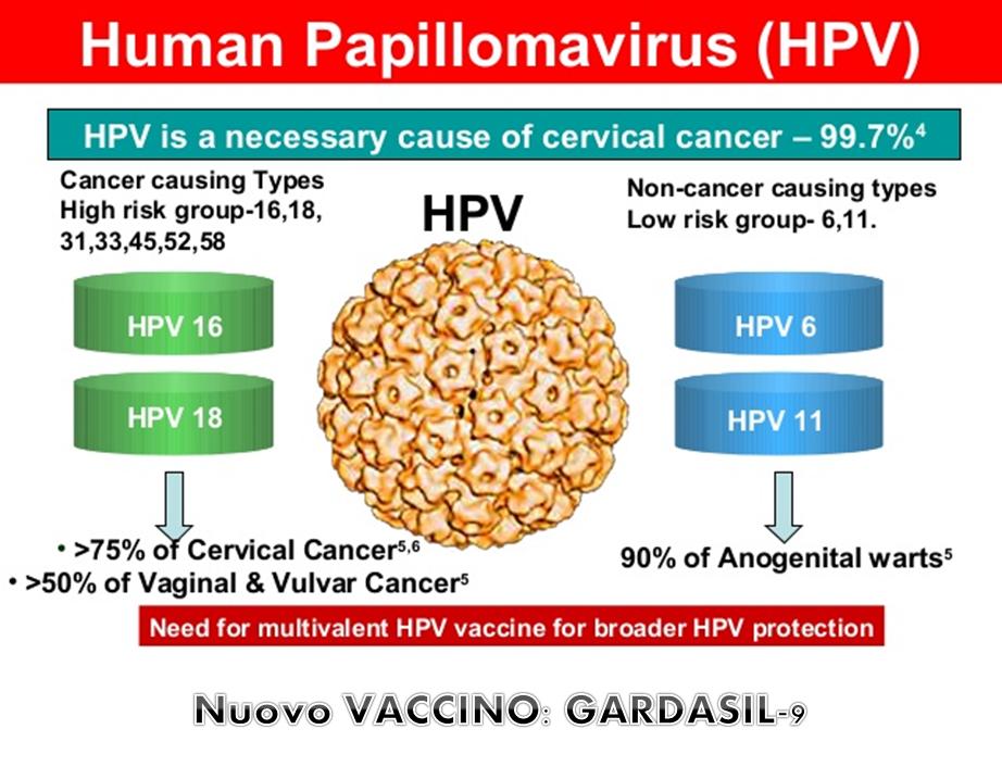 papilloma virus il