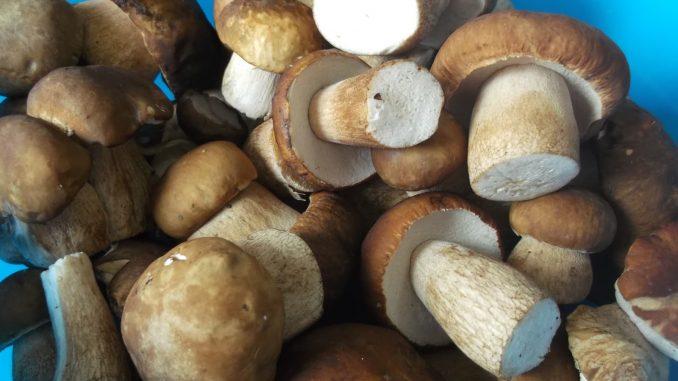 ciuperci octombrie