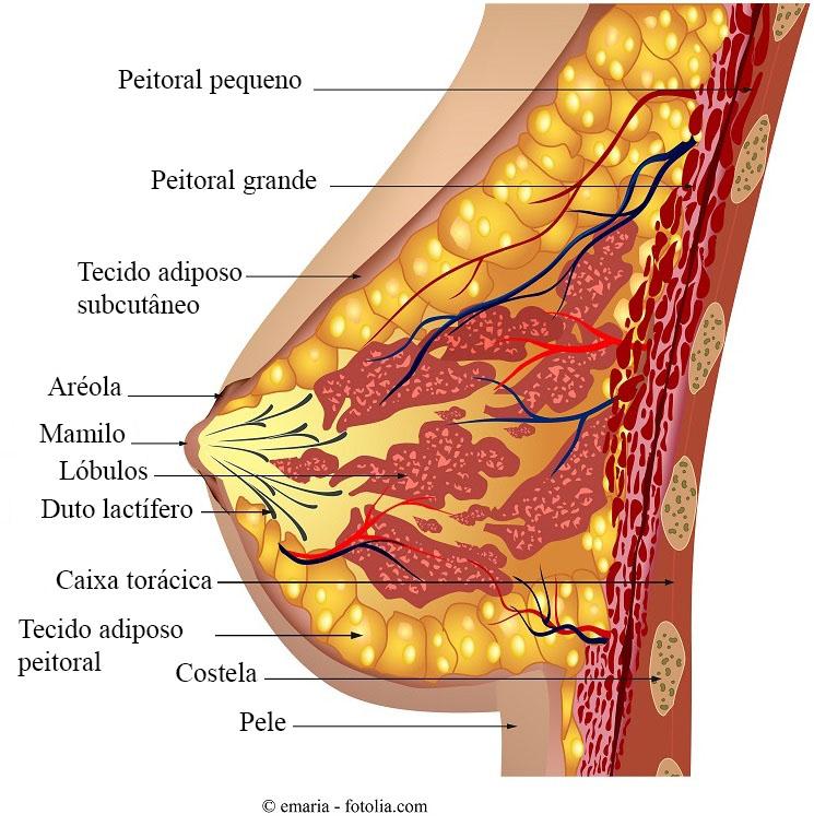 papiloma intraductal en el seno bacterii daunatoare