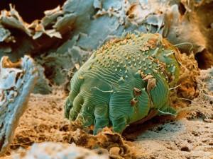 paraziti de cocos tratament naturist pentru parazitii intestinali