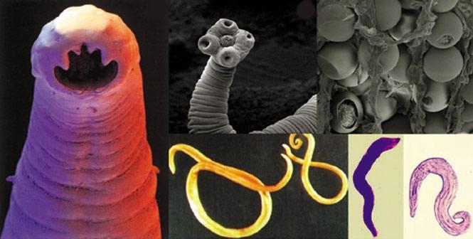 causes du papillomavirus humains