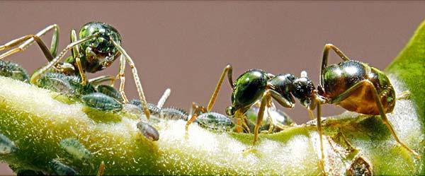 """Controlul conștiinței furnicilor, 1 thoughts on """"Utilizarea scoarței de furnici pentru psoriazis"""""""