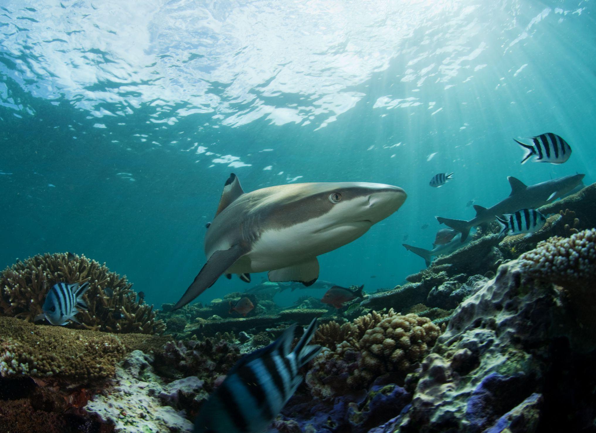 Ecosistemul Mării Negre | Itinerarii pontice
