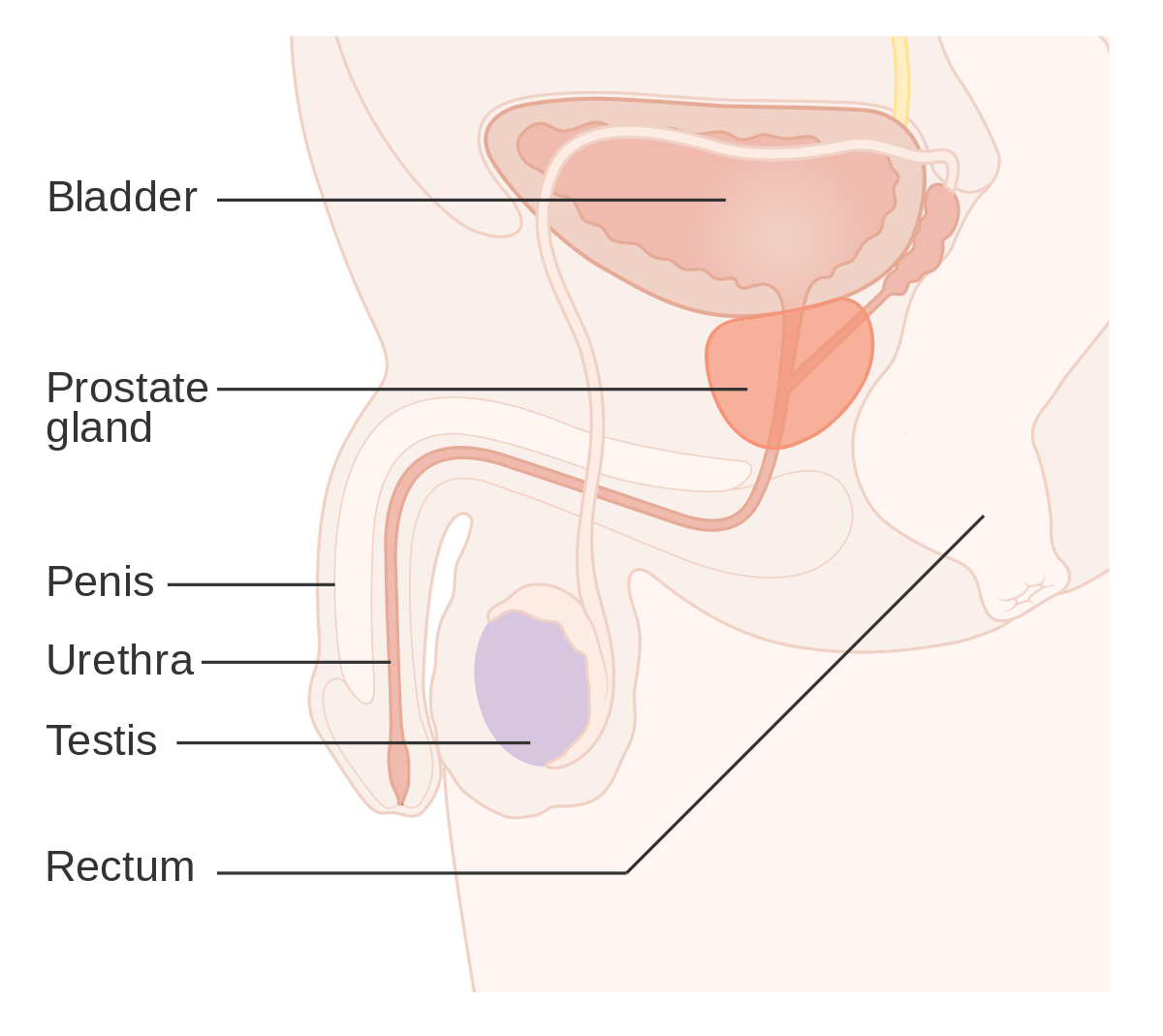 cancer hormonal prostata hpv treatment for mouth