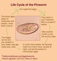 Pinworm provoacă boală. Medicamente anti paraziti