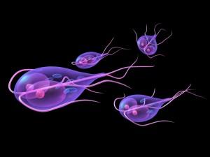 viermi giardiasis perioada de tratament cu helmintiaza