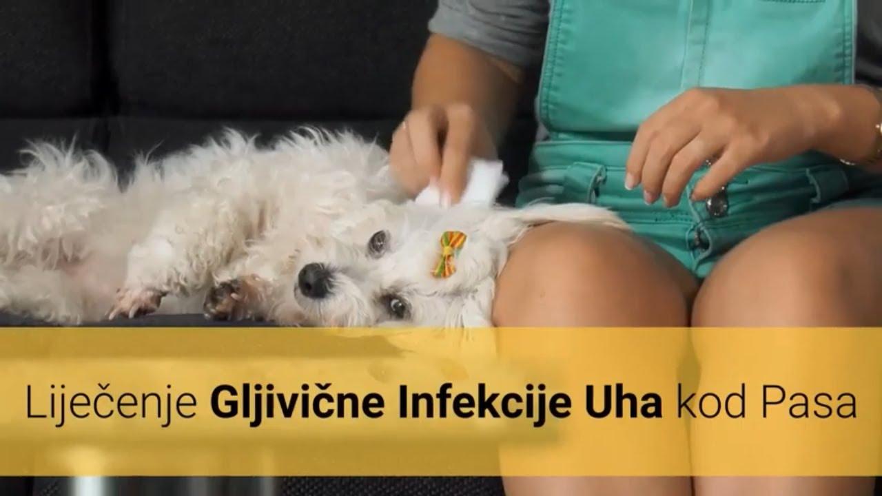 Oxiuros sin tratamiento - Ioana Bobocea (ibobocea) on Pinterest Tratamiento de oxiuros en ninos