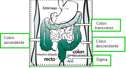ovariene - Traducere în spaniolă - exemple în română | Reverso Context