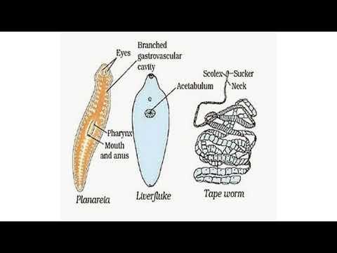 tinctură antiparazitară cum să ia respiratory papillomatosis pathology outlines