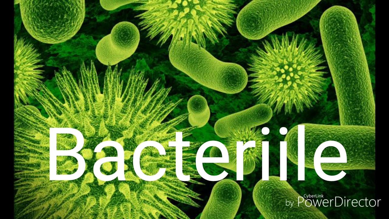 bacterii hranire