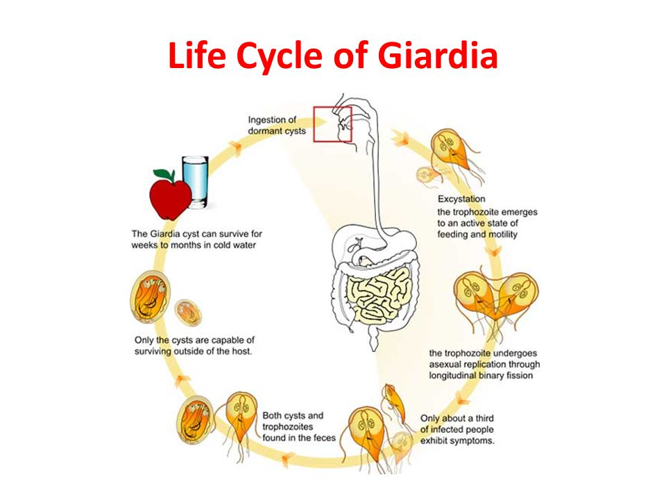 Giardia mens zwanger. Contact Form | Pizza Time Sibiu | 1+1 Gratis | Livrare Gratuita