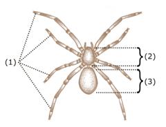 Care Animale Mănâncă Păianjeni? |
