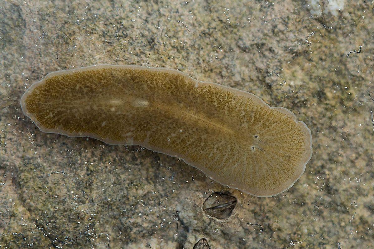 comprimate de vierme parazite