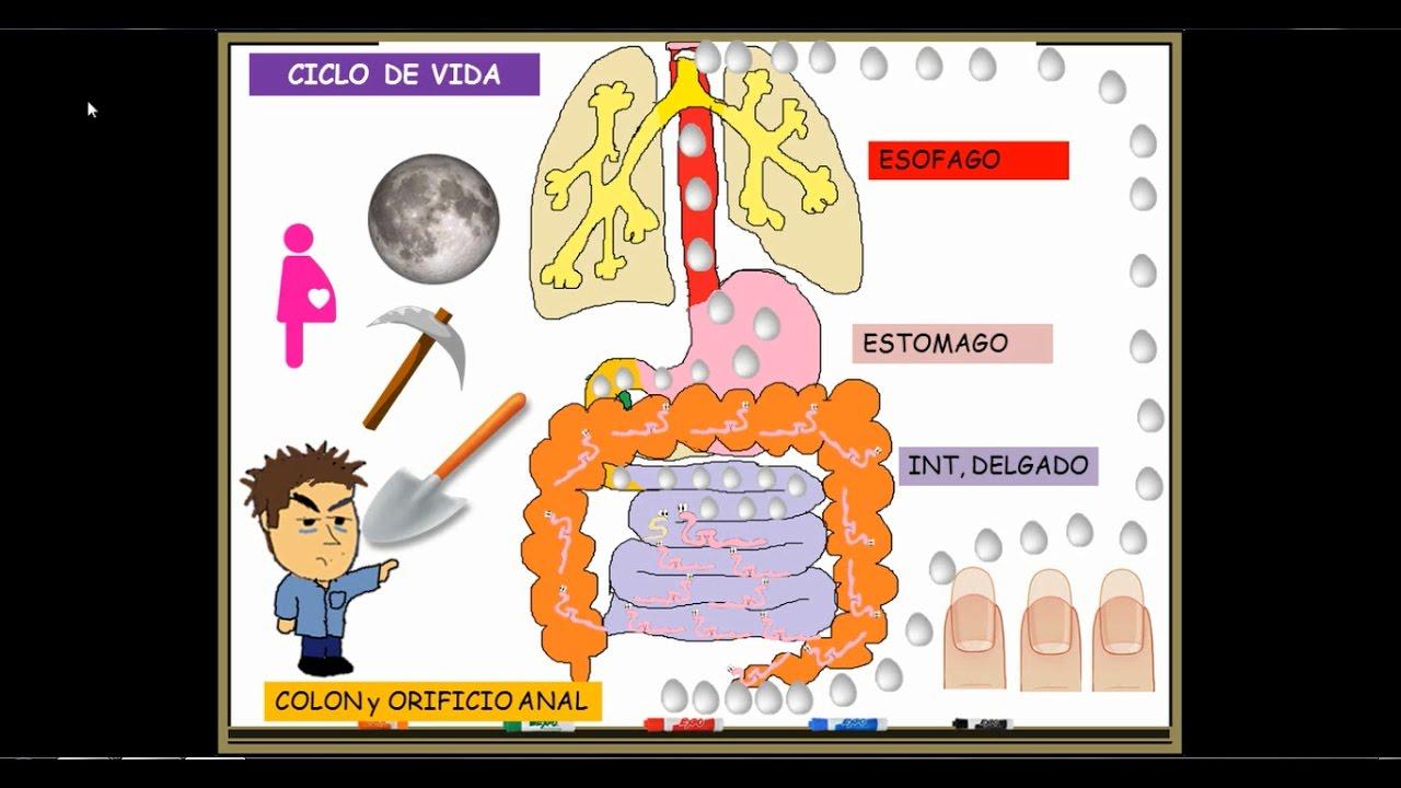 Instrucțiuni Pentru Luarea Pe Cale Orală A Pământului Cu Diatomee -