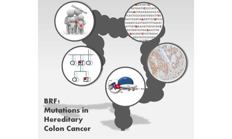 Cancer colorectal non-polipozic ereditar tip 1(HNPCC)-mutatii MSH2 - Synevo