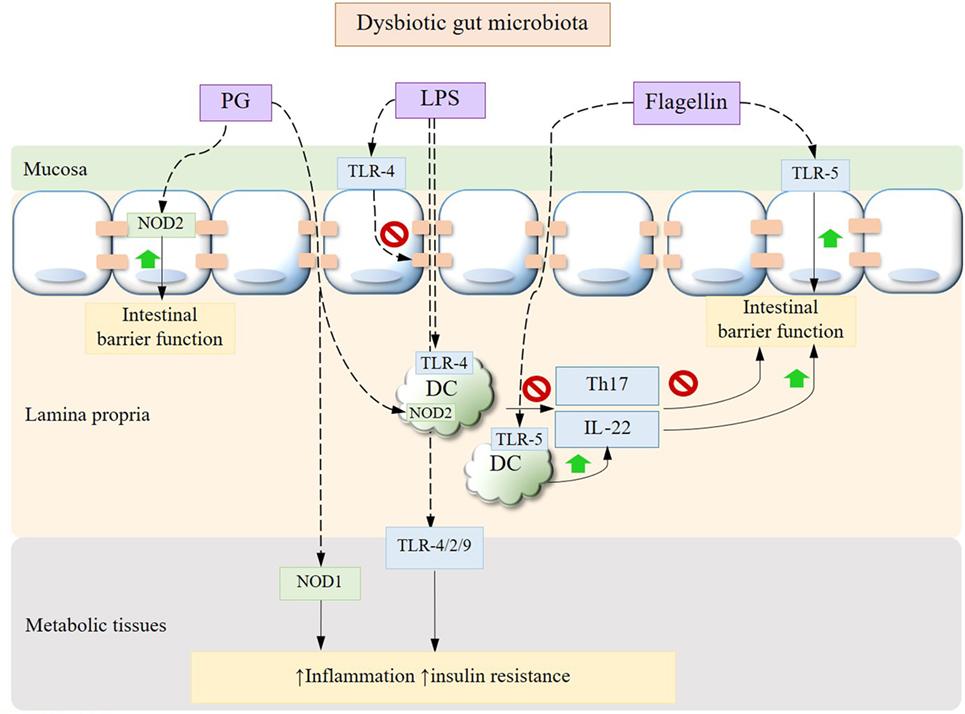 Dysbiosis gut microbiota. REVISTA FARMACIA, Dysbiosis of the microbiome