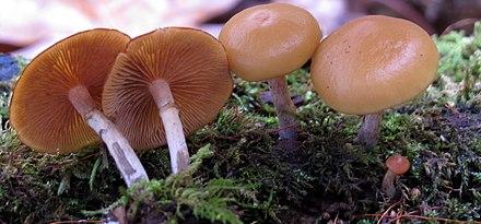 scapă de ciuperci parazite