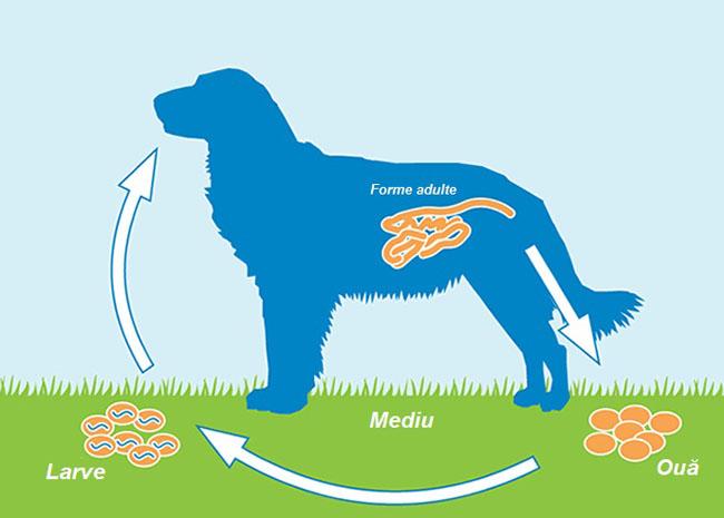 Importanţa deparazitării la animalele de companie