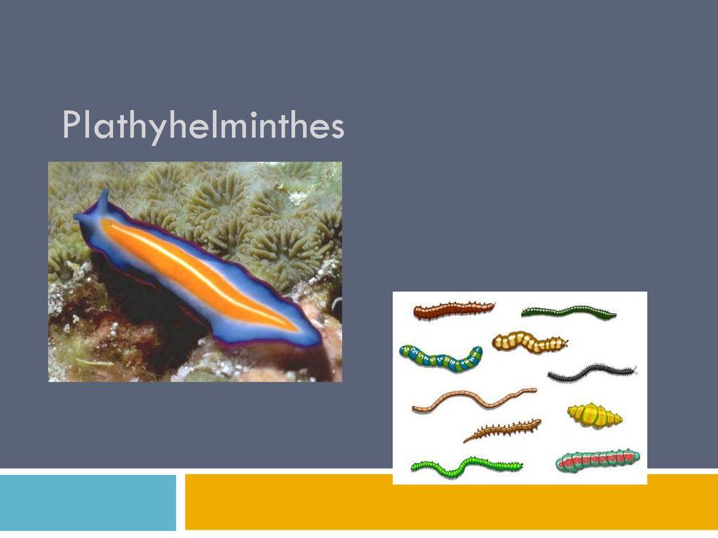 filum platyhelminthes și nemathelminthes cancerul colorectal definitie