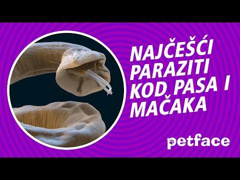 kozni paraziti kod macaka
