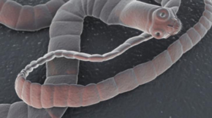 în câte grade moare oul de vierme