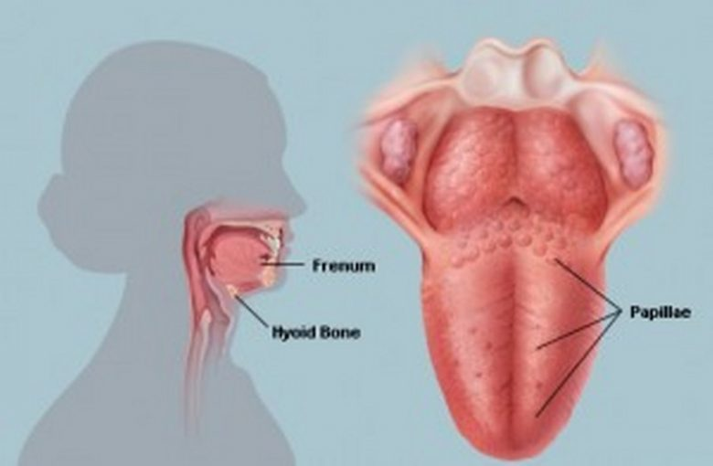papille base lingua paraziți albi în urină