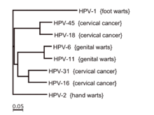 Virusul HPV. Tipuri de leziuni HPV: Diagnostic, tratament si prevenire