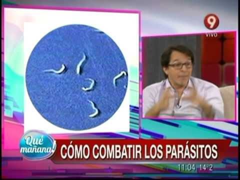 kozni paraziti kod macaka antimilitie parazitii
