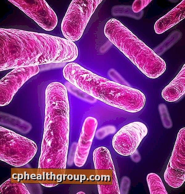 negi plate și genitale papillomatosis in lymphedema