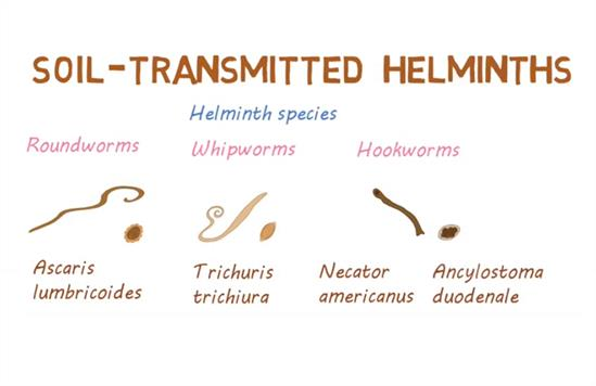 Who helminth treatment guidelines