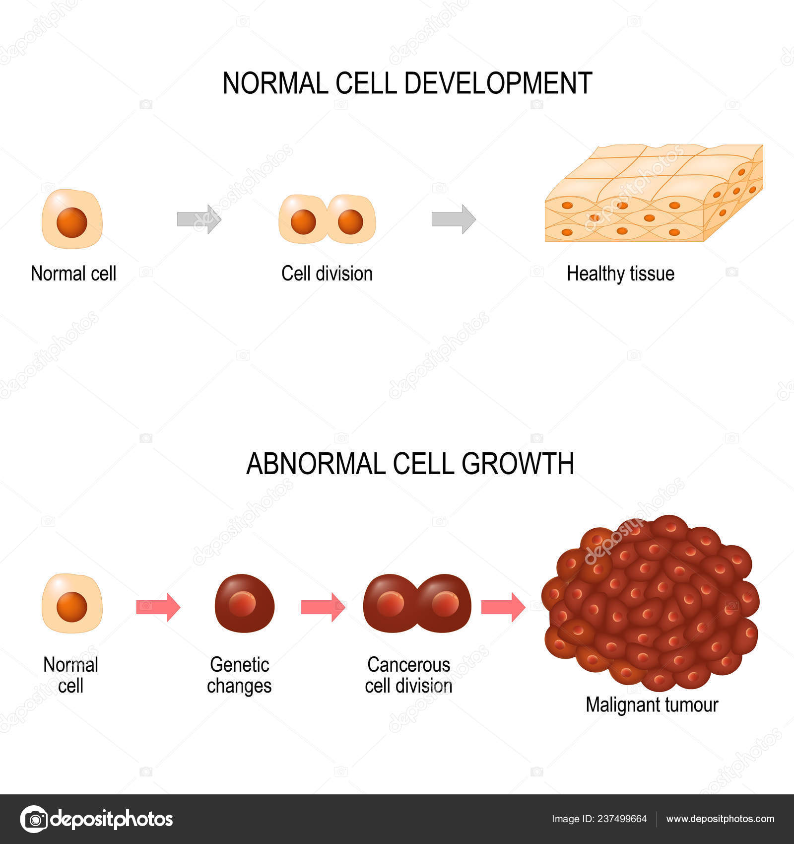 Parazitozele intestinale: giardioza si ascaridioza | p5net.ro