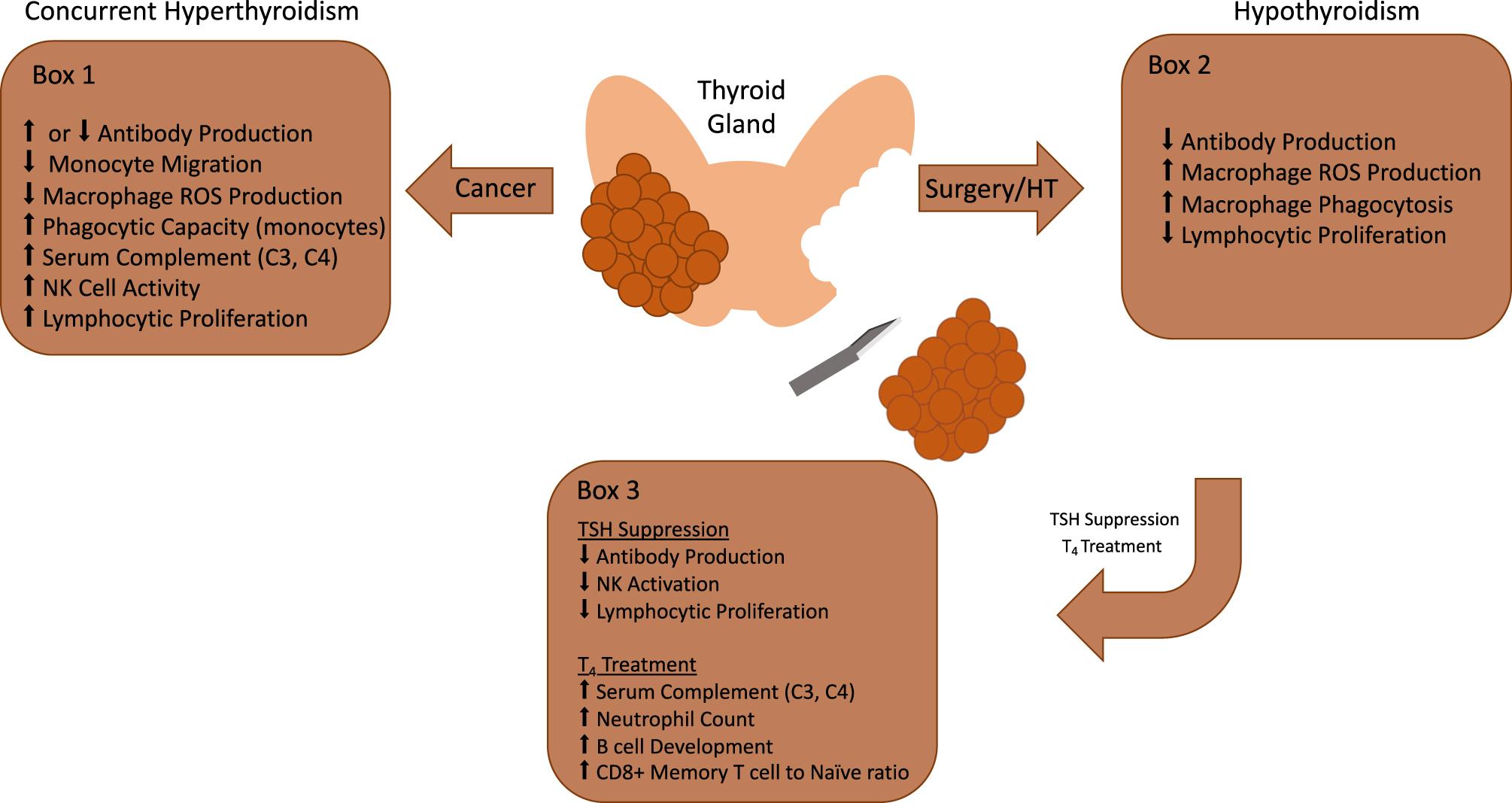Imunodepresia – potenţial factor de risc în cancerul primar-multiplu al organelor hormonodependente