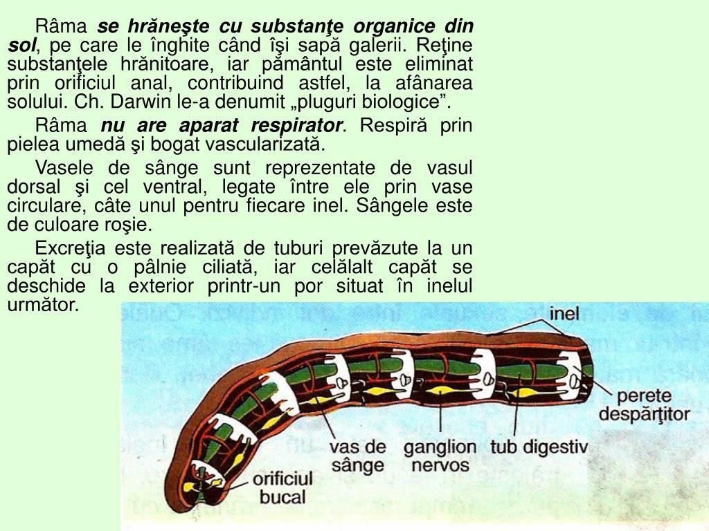 Paraziti helminth ppt, Helminthic infestation ppt - coboramlaprima.ro