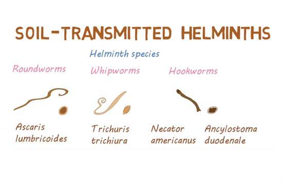 helminthiases la copii